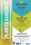 plantes-sauvages